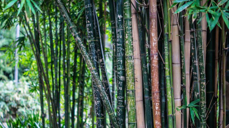 Einrichtung mit Bambus